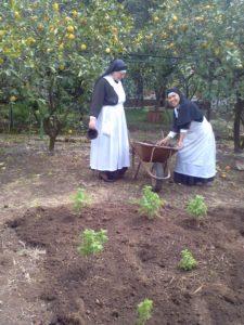 Artemisia annua anamed