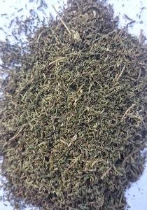 Artemisia annua - foglie essiccate